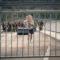 Endzeit | Em um mundo devastado duas garotas precisam lutar para sobreviver contra zumbis